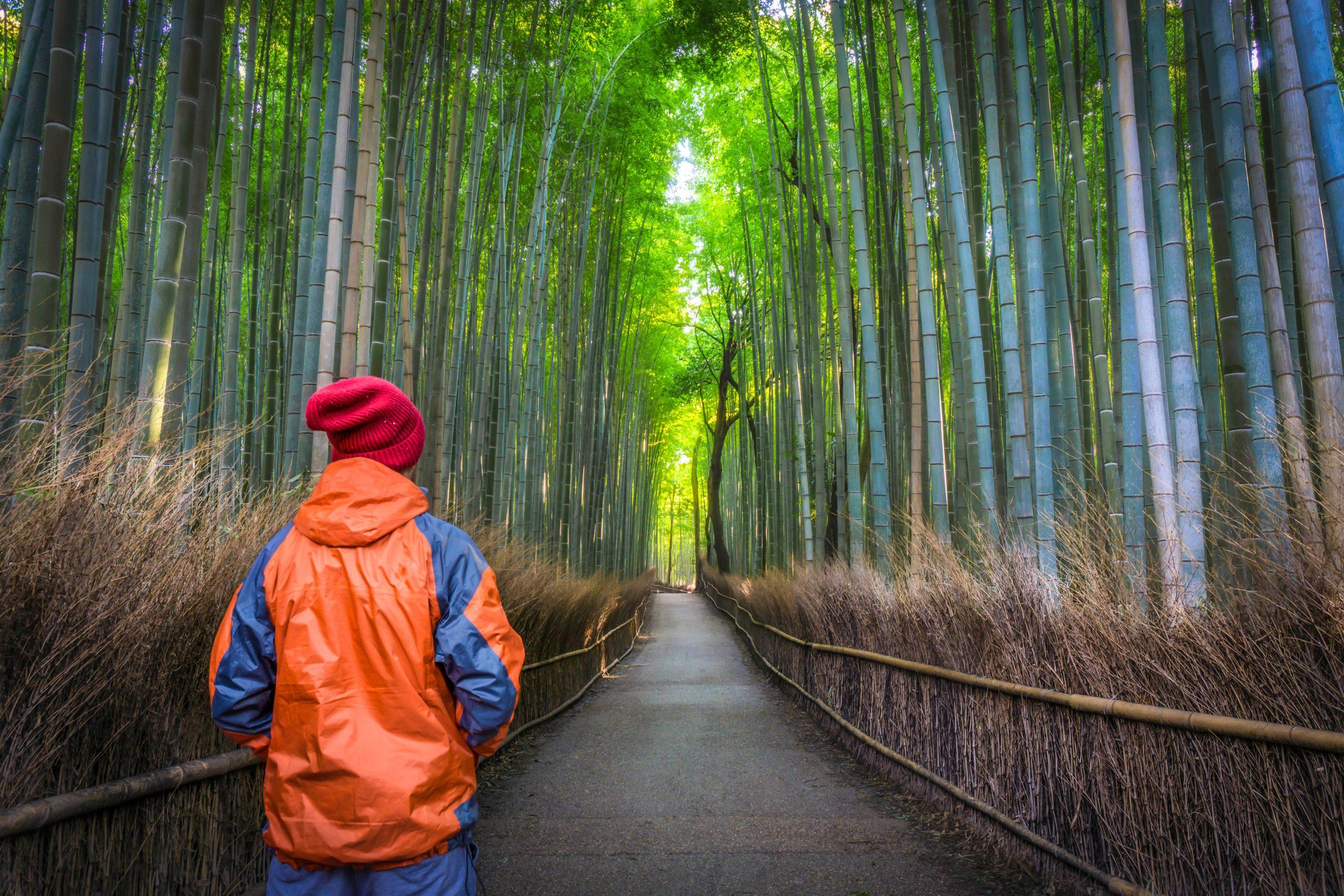 Matkailija kävelee tiheän metsän läpi kohti valoa